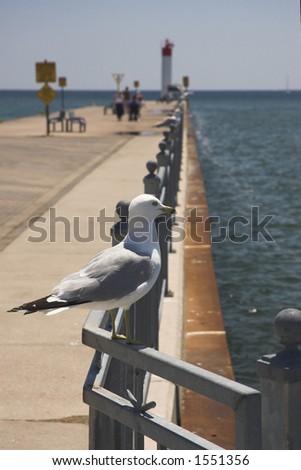 Seagull on pier railing in summer sunshine. Shallow focus. - stock photo