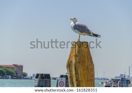 seagull on pole in the harbor  - stock photo