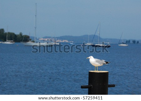 Seagull on post, boats in background - stock photo