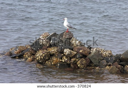Seagull on rocky outcrop