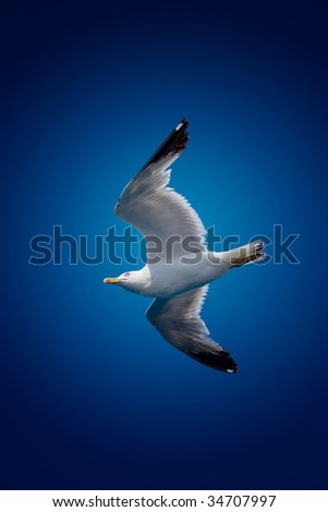 Seagull on sky