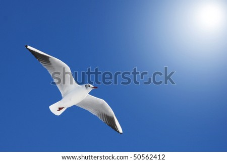 Seagull on sky - stock photo