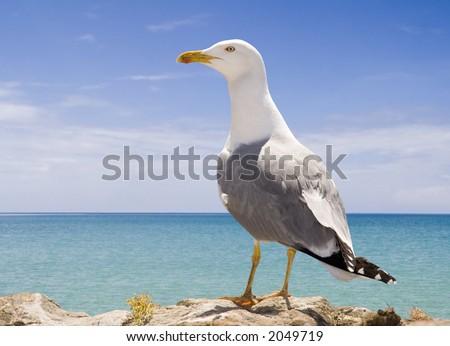Seagull on the beach - stock photo