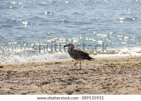 seagull on the beach