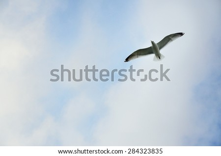 Seagull on the blue summer sky in Sweden - stock photo