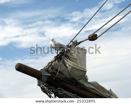 seagull on the front of a sailing ship