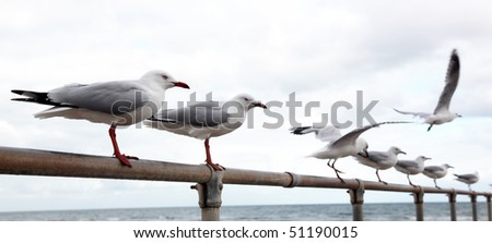 Seagull on the line - stock photo
