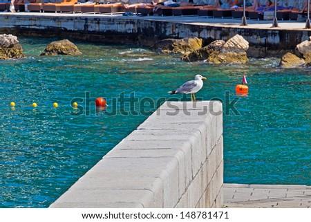 Seagull on the railing against the sea. Animal. Bird. Hvar. Croatia.  - stock photo