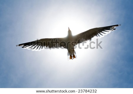 Seagull on the sky - stock photo