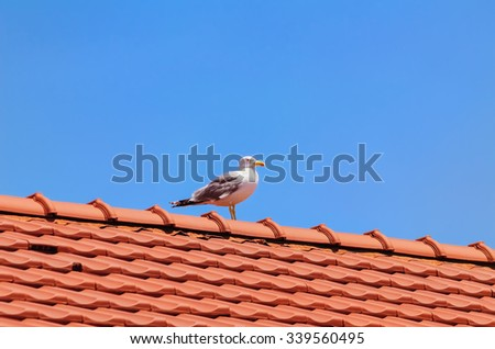Seagull on the Top of the Roof - stock photo