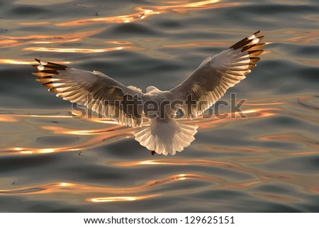 Seagull over ocean waves