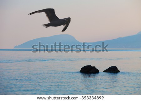 seagull over the Black Sea at sunrise at the coast of the Crimea