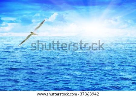 Seagull over the sea. - stock photo