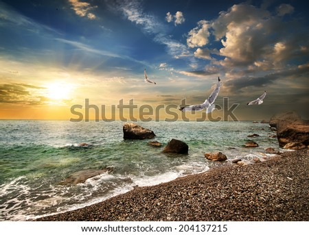 Seagull over the sea in the mountains - stock photo