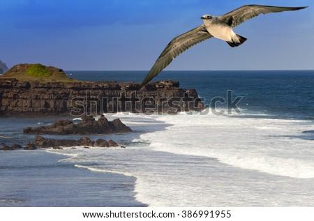 seagull over the sea on Gri-Gri's cape, Mauritius - stock photo