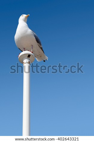 Seagull perched on a flag pole with big blue sky. - stock photo