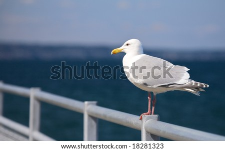Seagull perched on metal railing by the sea - stock photo