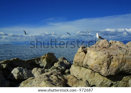 Seagull perched on rock watches two others fly on Antelope Island near Syracuse, Utah. - stock photo
