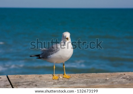 Seagull perched on the wooden pier railing