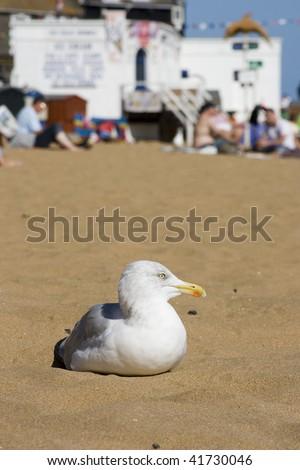 Seagull sat on beach in the sun, Broadstairs, Kent - stock photo