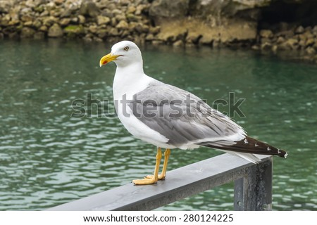 seagull seaport of Llanes, Asturias, Spain  - stock photo