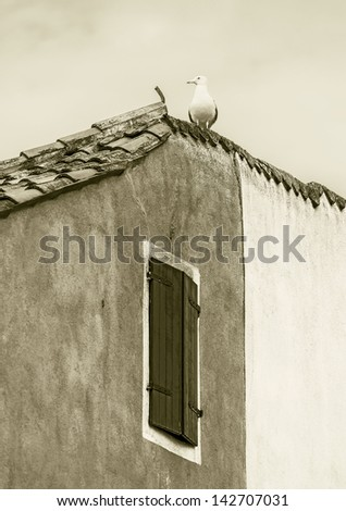 Seagull sits at the roof of the vinetian picturesque house - Venice, Italy (stylized retro)
