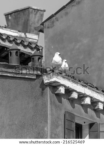 Seagull sits on the chimney pipe of the vinetian church - Venice, Italy (black and white) - stock photo
