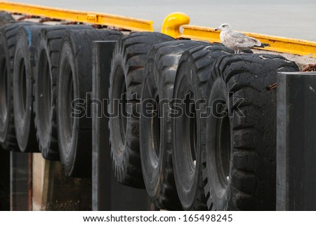 Seagull sits on the piers wall with tires - stock photo