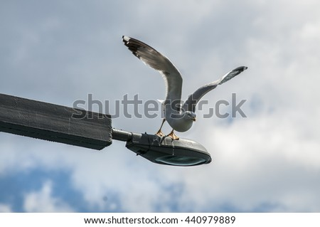 Seagull sitting on a lantern and prepared to take off. - stock photo