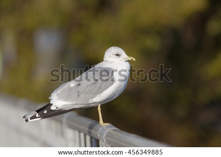 seagull sitting on the railing close up - stock photo
