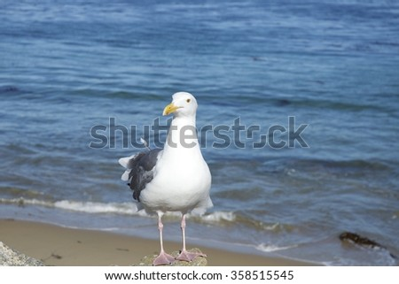Seagull sitting on the stone on the beach  - stock photo