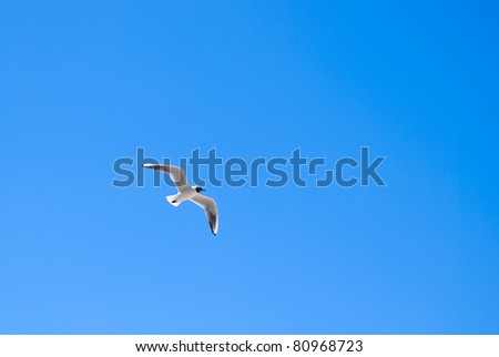 Seagull soaring in a cloudless sky - stock photo