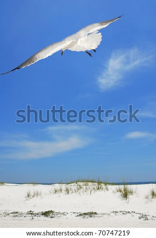 Seagull soaring over pretty beach - stock photo