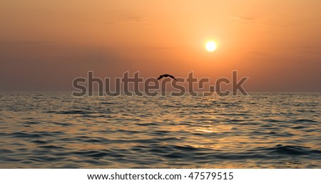 Seagull soaring over the sea at sunset - stock photo