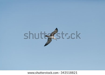 seagull soars freely in the sky over the sea