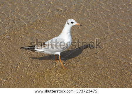 Seagull standing in the water on the beach sand. - stock photo