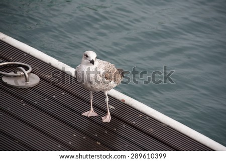 Seagull standing on a wooden pier - stock photo