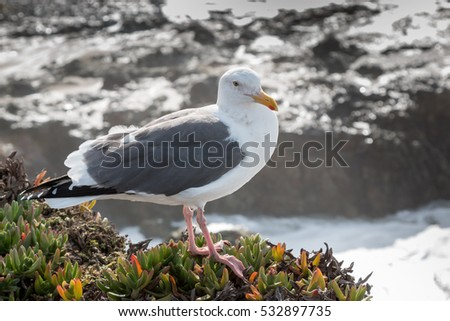 Seagull Standing On Plants By Ocean