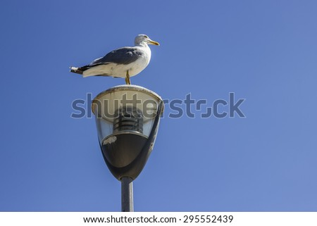Seagull standing on the street light pole. Seagull on post against a clear sky background. - stock photo