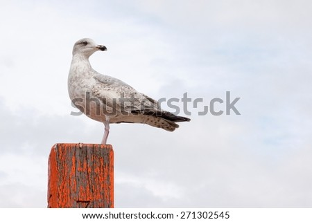 Seagull standing on top of a painted wooden pole in Zandvoort, Holland - stock photo