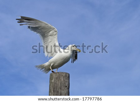 Seagull standing on wooden post.