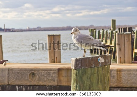 Seagull standing on wooden post at pier with East River on background - stock photo