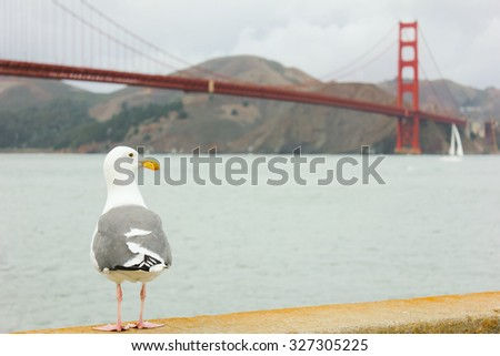 Seagull standing with Golden Gate bridge in background at San Francisco,USA. - stock photo