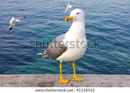 Seagull tired - stock photo