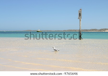 Seagull wading in turquoise clear ocean water. One fishing boat in background. Australia.
