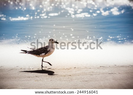 Seagull walking in the tide on Virginia Beach in the morning summer sun - stock photo