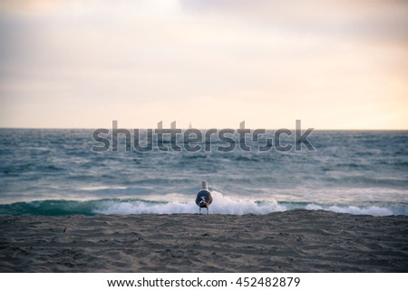 seagull watching ocean at beach