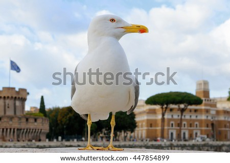 Seagull with yellow beak in the background Saint Angelo Castle in Rome Italy - stock photo
