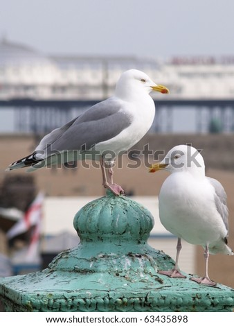 Seagulls - stock photo