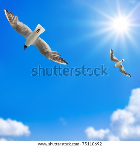 Seagulls against the solar sky